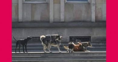 Труење на кучиња