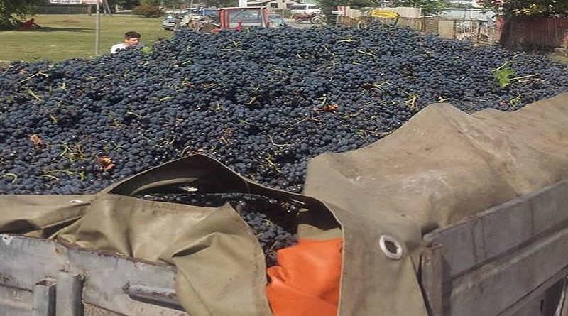 грозје