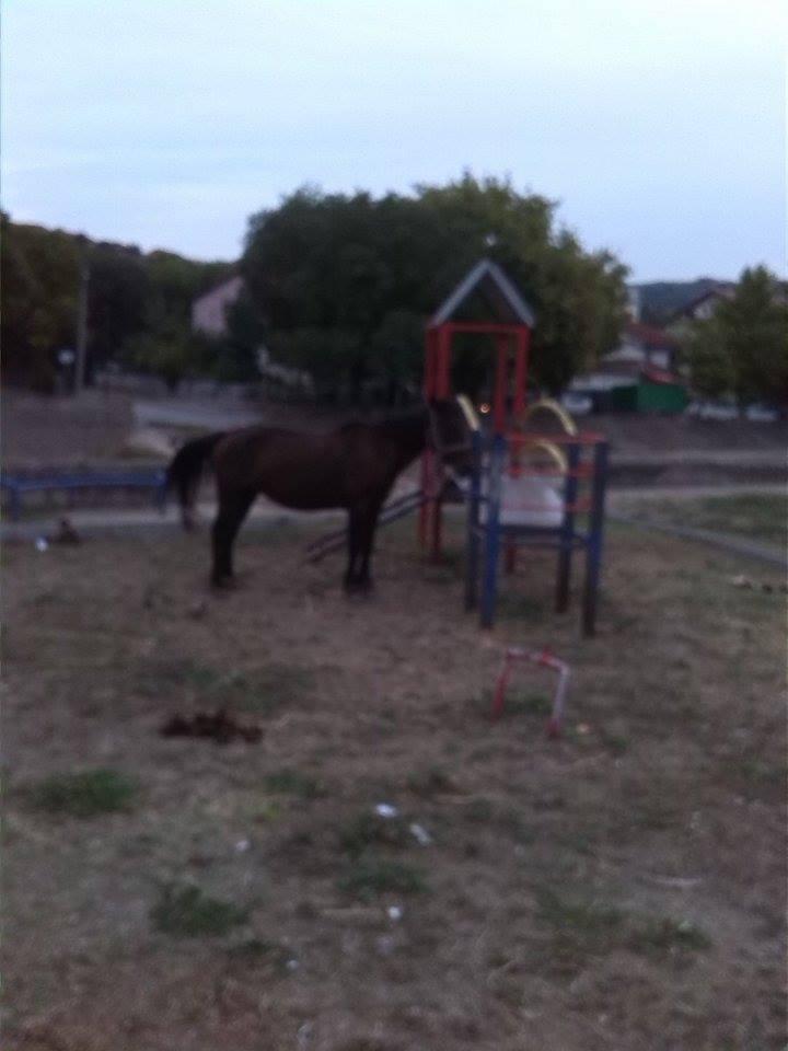 konj-igraliste3_800x445