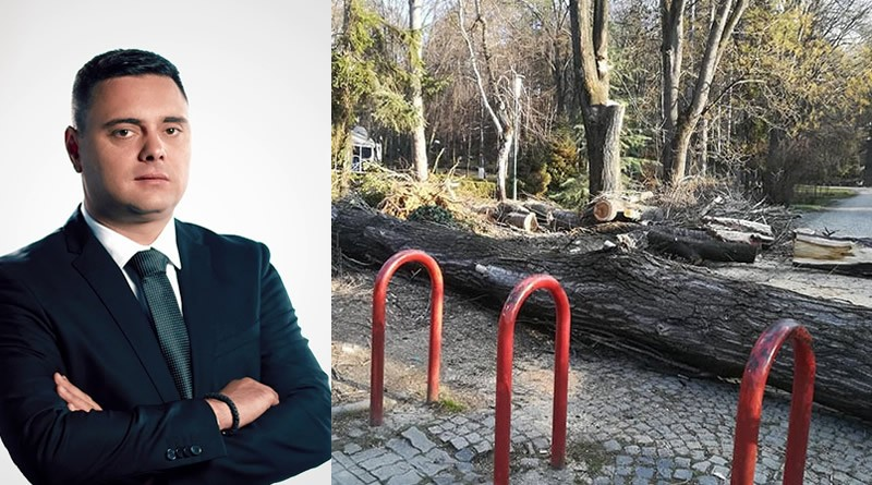 Луда работа, исечени 60-годишни дрва во градскиот парк во Кавадарци!